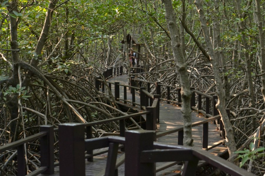 picture of forest in the Pranburi National Park